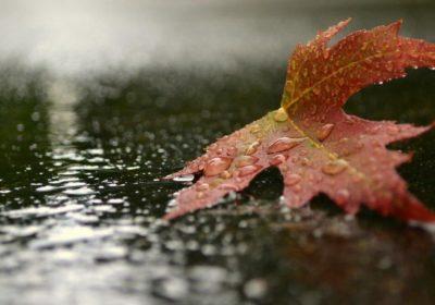 «Под музыку осеннего дождя»